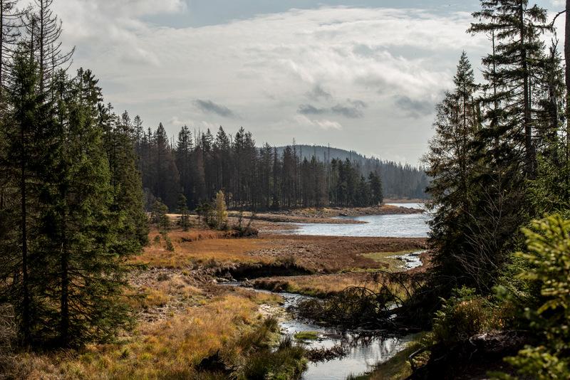 Herbst am Oderteich