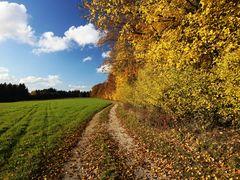 Herbst am Schloßberg im Altmühltal
