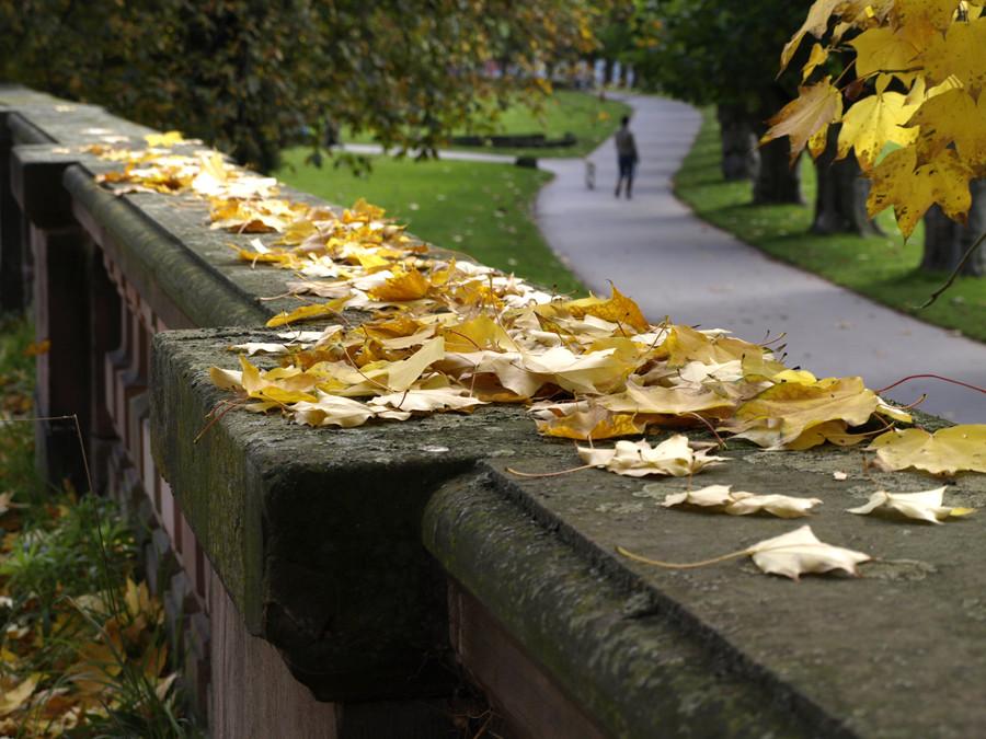 Herbst am Staden