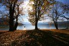 Herbst am Tegernsee