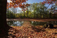 Herbst am Teich II