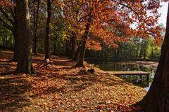 Herbst am Teich III