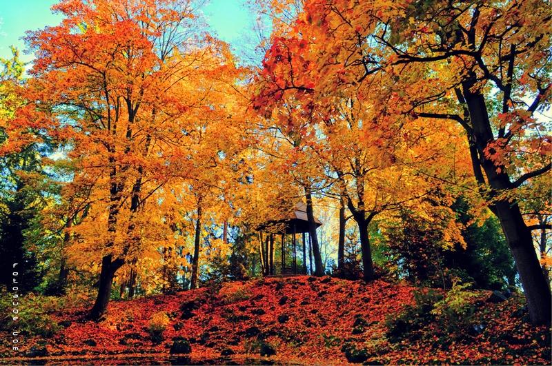 Herbst am Theresienstein