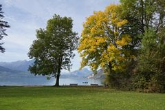 Herbst am Thunersee
