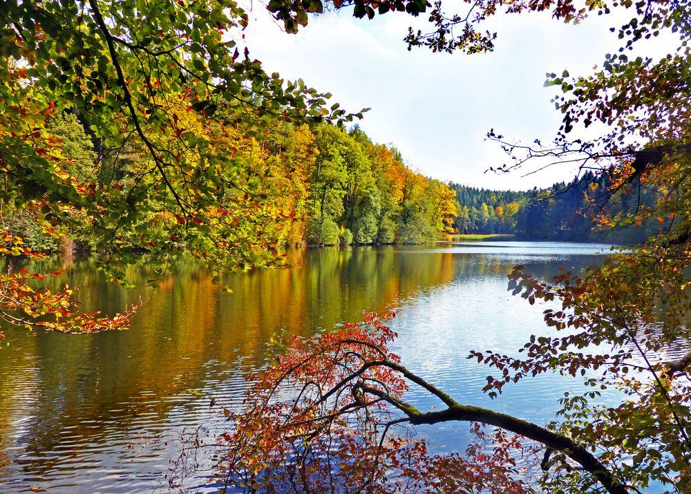 Herbst am Waldweiher