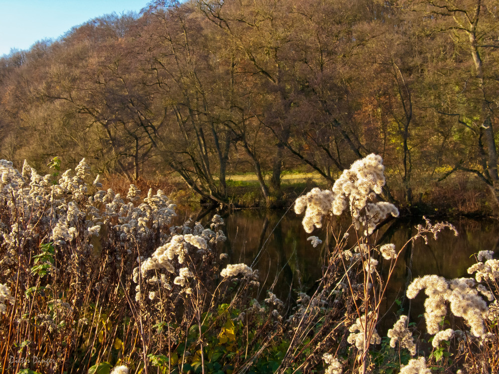 Herbst am Wupperufer