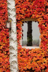 Herbst an der Hauswand