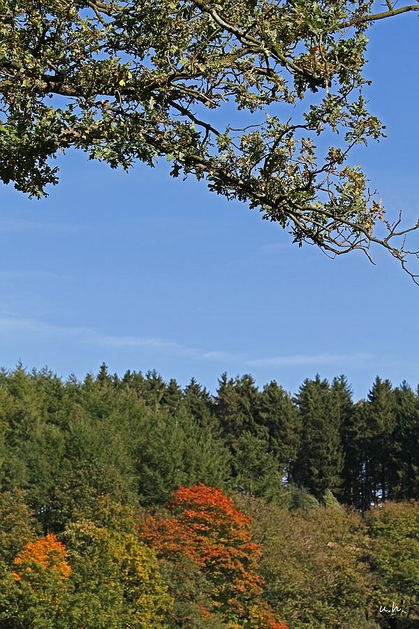 """""""Herbst an der Heilenbecker Talsperre"""""""