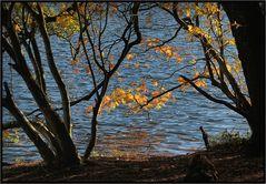 Herbst an der Krummen Lanke
