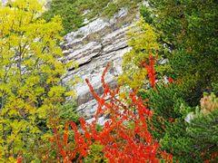 Herbst an der Südrampe im Wallis. - L'automne nous offre ses couleurs...