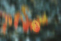 """Herbst an der """"Us"""""""