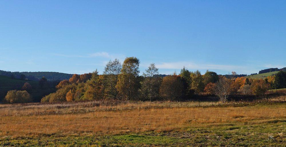 Herbst an einem Moor im Hotzenwald