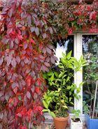 Herbst auf Balkonien 2