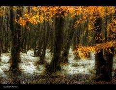 Herbst-auf-dem-Darß