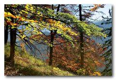 Herbst auf dem Grünstein