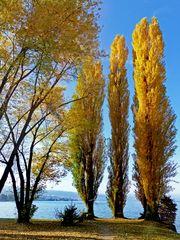 Herbst auf der Halbinsel Au