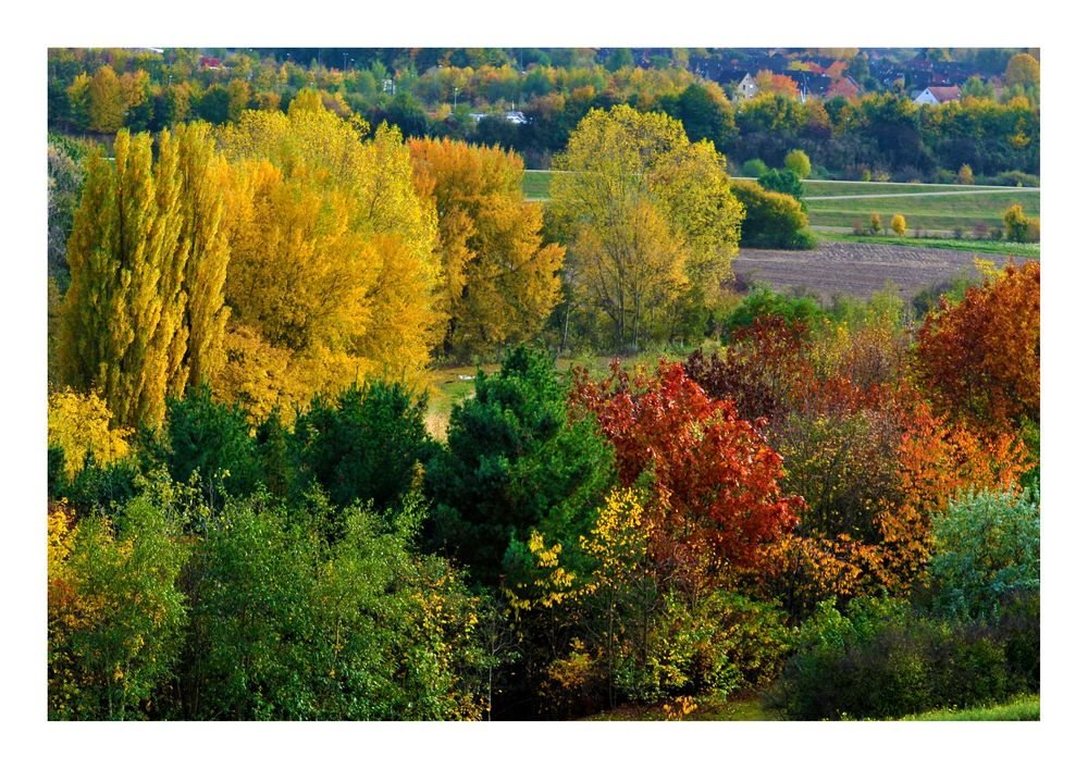 Herbst auf der Halde