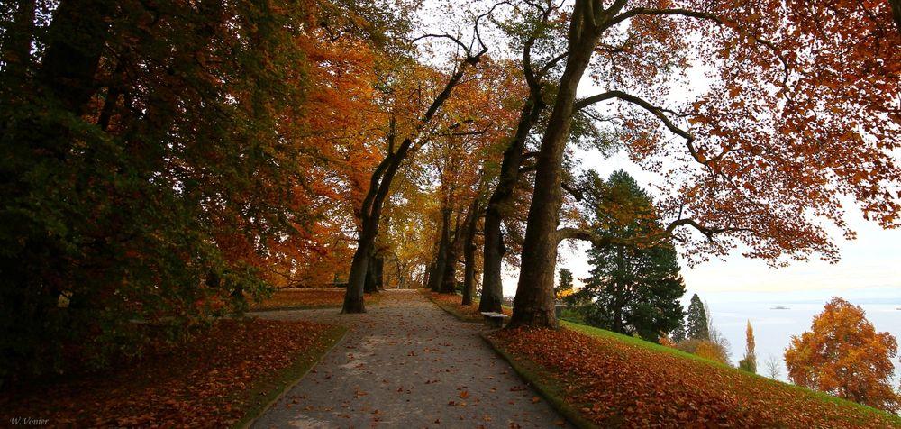Herbst auf der Insel Mainau