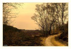 """"""" Herbst auf der Mechelse Heide """""""