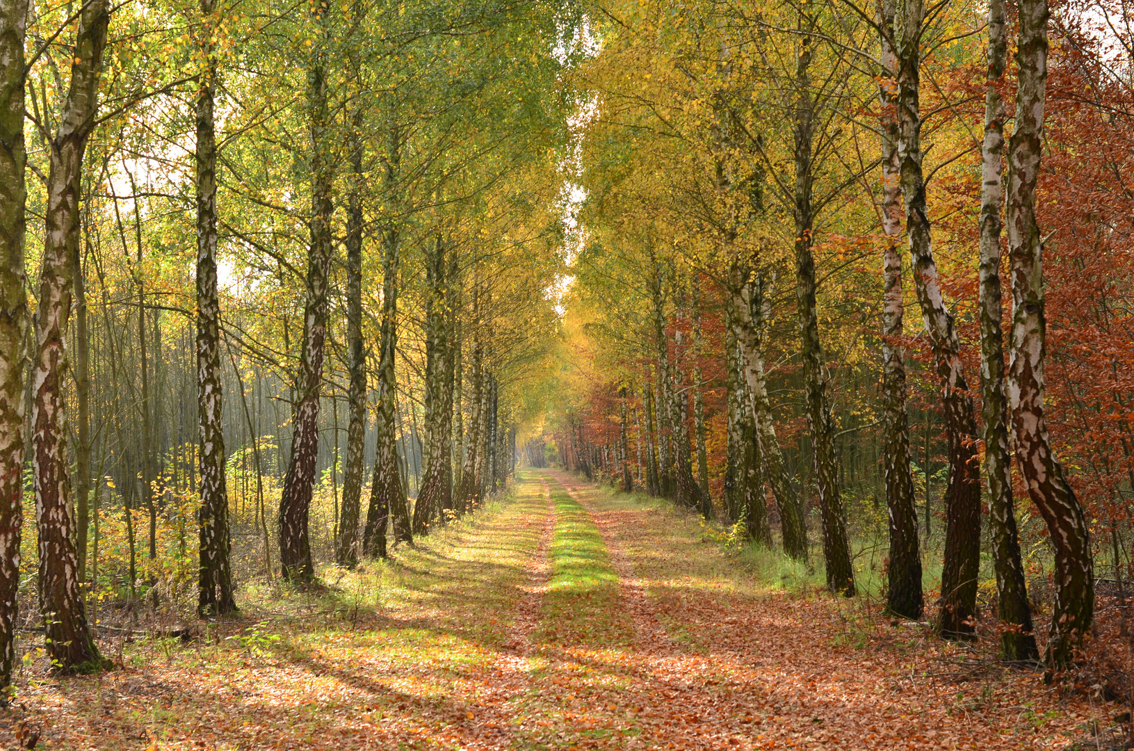 Herbst auf der Wiedfelder Höhe
