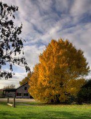 Herbst auf Gut Strief