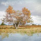 Herbst auf Hornisgrinde - Schwarzwald