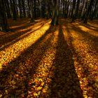 Herbst auf Jasmund