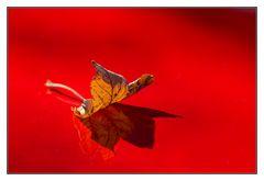 Herbst auf rot