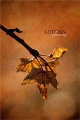 [ Herbst ]