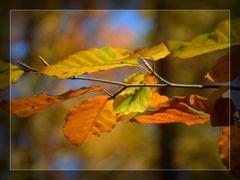 ``Herbst``
