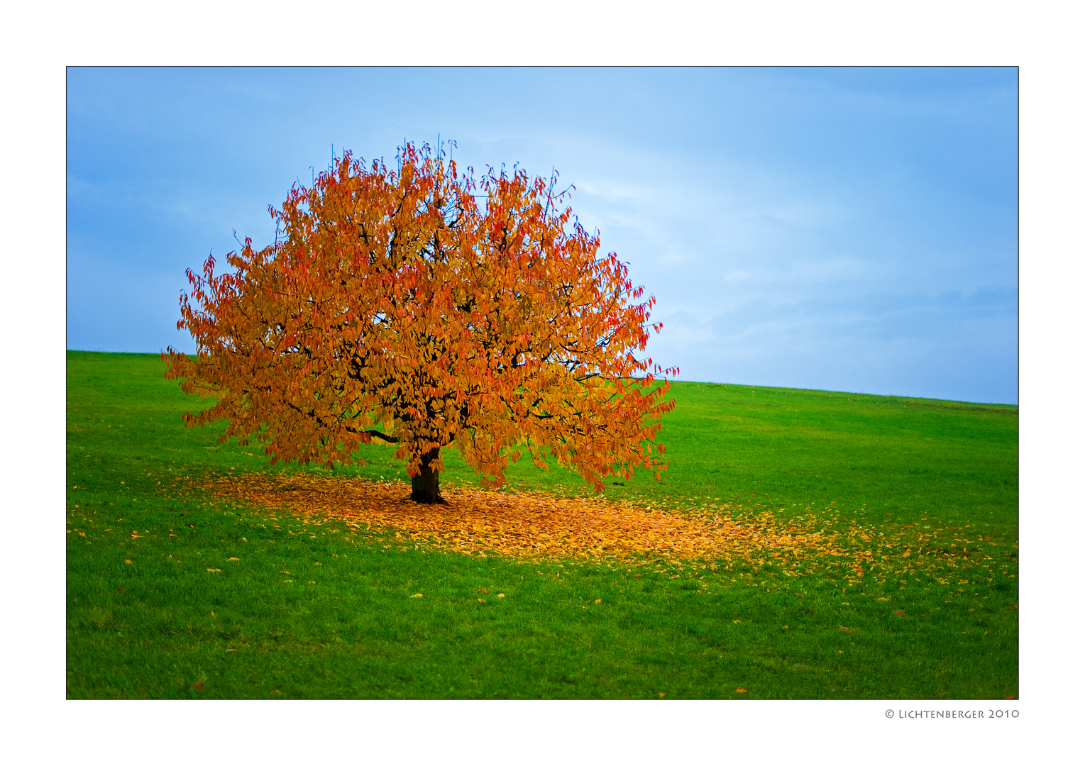 herbst baum foto  bild  natur und tiere bilder auf