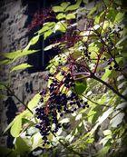 Herbst - Beeren