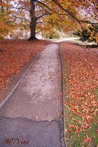 ..Herbst beginnt..