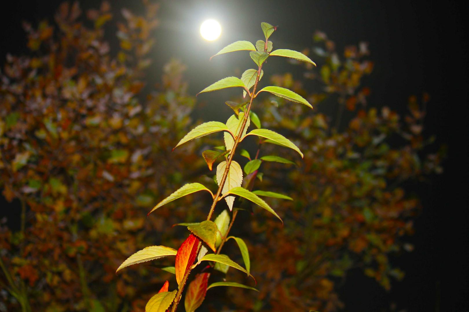 Herbst bei Vollmond