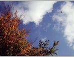 Herbst (Bild zum Sonntag)