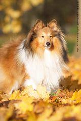 Herbst Bilder mit Tjure