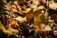 Herbst -Blätter