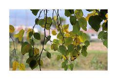 Herbst-Blätter.