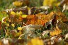 Herbst-Blätter