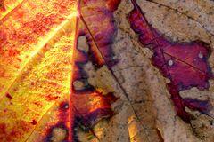 """""""Herbst-Blätter-Färbung"""""""