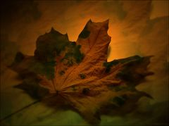 Herbst Blätter
