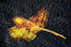 Herbst Blues D71 8341