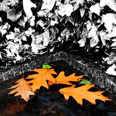 Herbst Blues KDL 2176