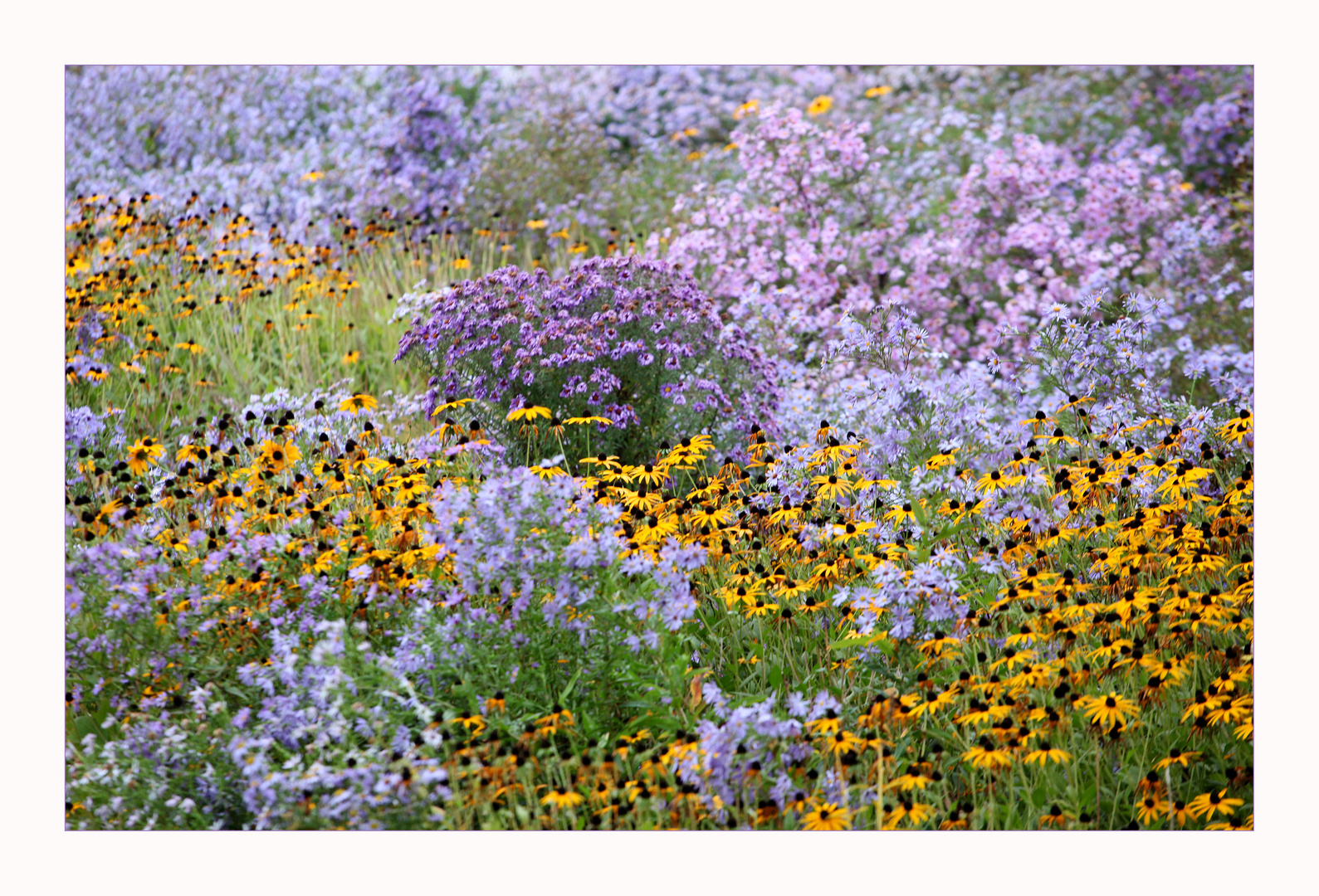 Herbst-Blumen-Blüten-Meer