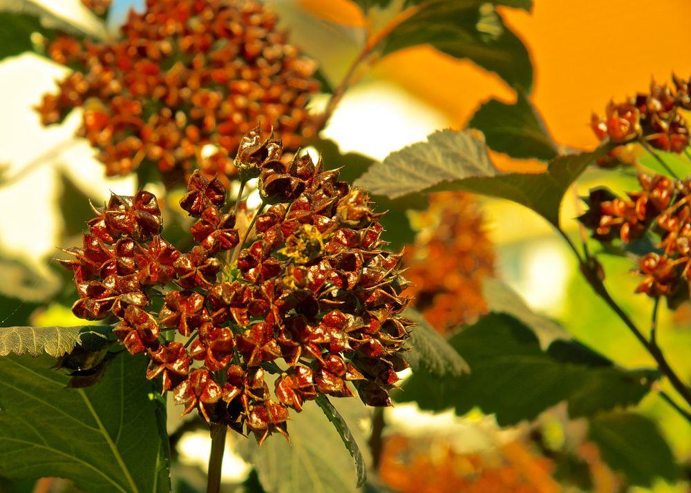 Herbst - braunbeige und grünweiß -
