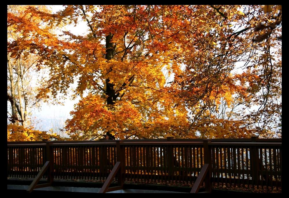 Herbst - Brücke