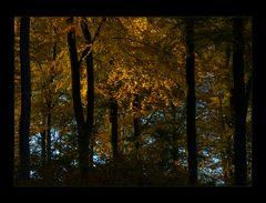 Herbst- Buchen- Glimmen... - oder: ...kein Spiegelbild...