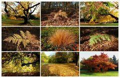 Herbst-Collage 2012 - 1