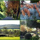 HERBST-COLLAGE