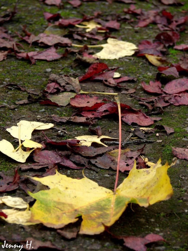 Herbst =D